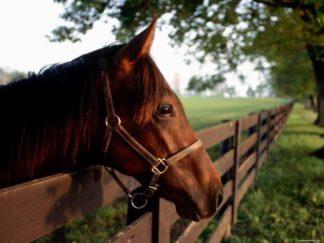 Конные прогулки в Адлере из Красной Поляны