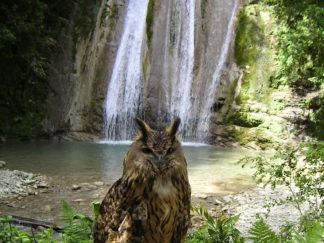 Экскурсия на 33 водопада в Сочи из Адлера. Фото.