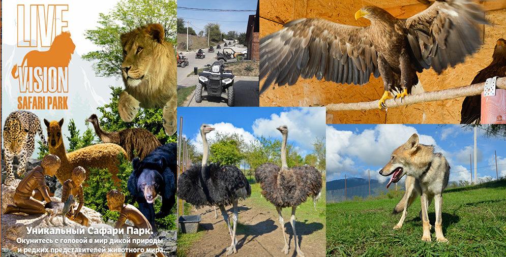 Баннер сафари парка в сочи: Волк, медведь, ястреб, страусы